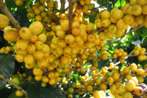 Conab releases first forecast for Brazil's 2017-18 harvest