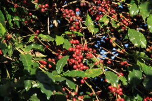 ICO Reports Arabica Prices Temporarily Under Pressure While Robusta Gains