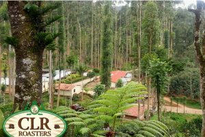 CLR Roasters to expand in Nicaragua
