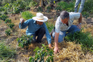 Feed the Future partnership for climate smart coffee officially launches