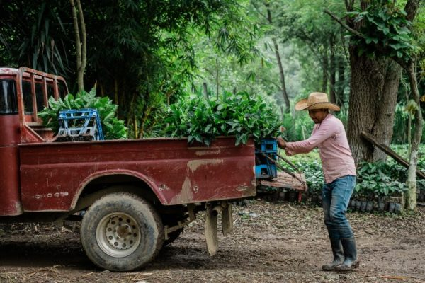 Starbucks Commits $20M for Emergency Relief to Central American Farmers