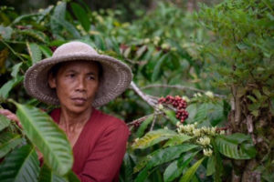 "Boncafé & Java Mountain Coffee Form an ""Asian Sustainable Coffee Distribution""  Partnership"