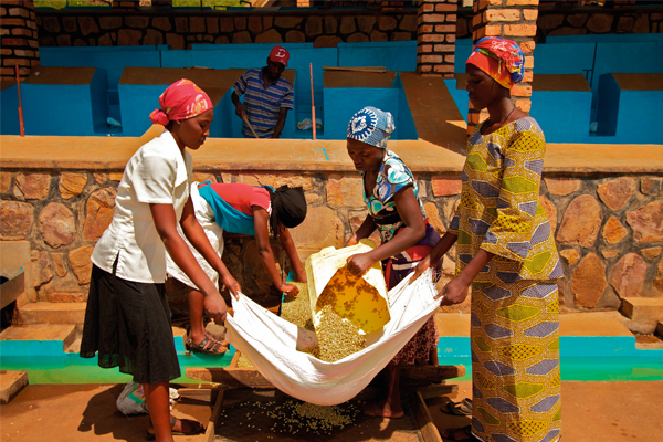 For Burundi, failure to improve coffee production is not an option