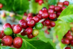 Nestlé Mexico invests US$154M in coffee factory in Veracruz