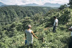 World Coffee Research joins MOCCA Project in South America