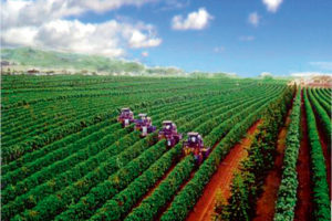 Mechanization in the Coffee Orchard