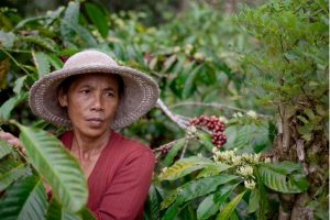 All-women coffee farms supply Balinese hotels