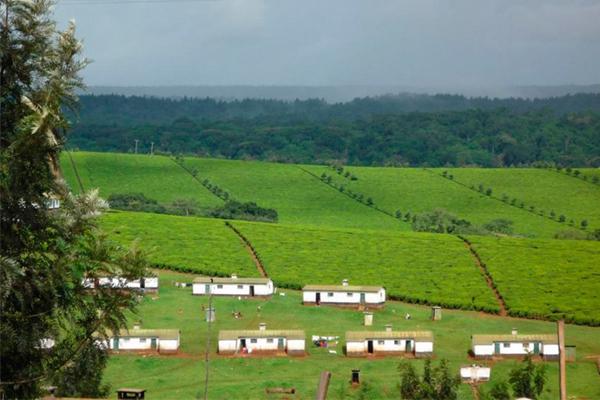 Africa Dominates World Tea Exports, While Still Evolving