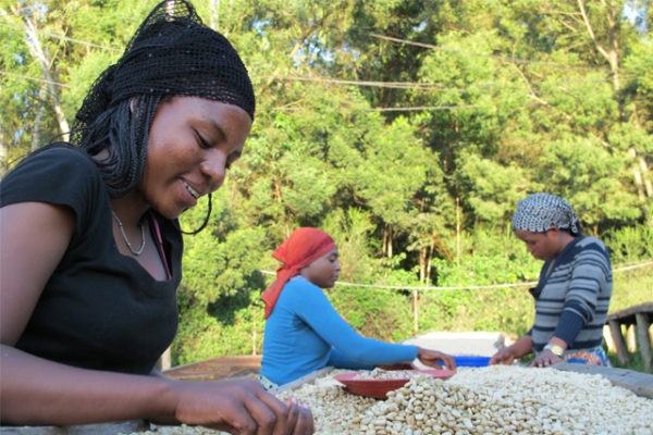 Neumann Kaffee creates NKG Bloom to aid coffee families