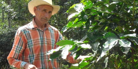 Coffee-producing countries collaborate to find a pricing solution