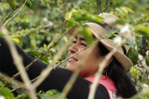 Peet's anniversary blend supports women coffee farmers
