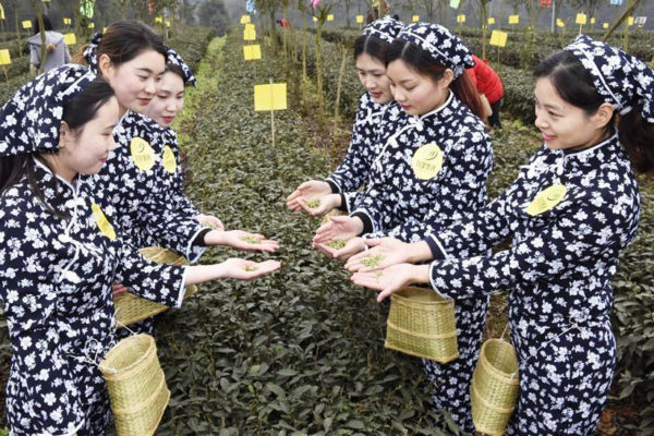Yibin hosts Sichuan China 2017 annual International Tea Conference